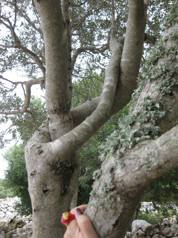dancing tree reincarnation